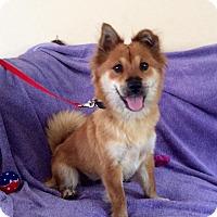 Adopt A Pet :: DARBY - Boca Raton, FL
