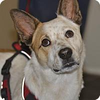Adopt A Pet :: Mozzi - Meridian, ID