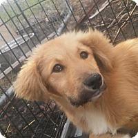 Adopt A Pet :: Leslie - Broken Arrow, OK