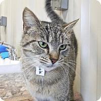 Adopt A Pet :: Lola - St. Francisville, LA
