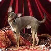 Adopt A Pet :: Twix - Indianapolis, IN