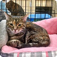 Adopt A Pet :: Maeve - Bloomingdale, IL