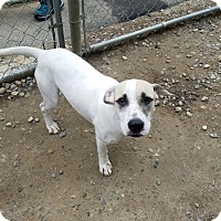 Adopt A Pet :: Perla - Freeport, ME