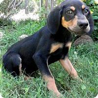Adopt A Pet :: Jethro - Tyler, TX