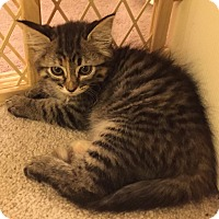 Adopt A Pet :: Kandy - Colorado Springs, CO