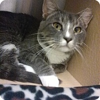 Adopt A Pet :: Troy - Plainville, MA