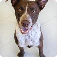 Adopt A Pet :: Winston - Yukon, OK
