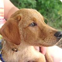 Adopt A Pet :: Stone - Groton, MA