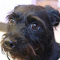 Adopt A Pet :: Gronk - Claremore, OK