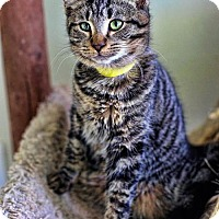 Adopt A Pet :: McGee - Markham, ON