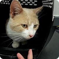 Adopt A Pet :: Melman - Paducah, KY