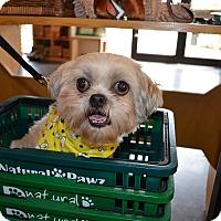 Adopt A Pet :: Bootsie Barkley - Houston, TX