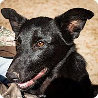 Adopt A Pet :: Miss Moonshine - Daleville, AL