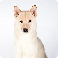 Adopt A Pet :: Naha - St. Louis Park, MN