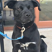 Adopt A Pet :: Okie - Centreville, VA