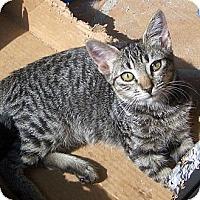 Adopt A Pet :: Tabbitha - Redlands, CA