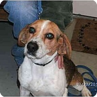 Adopt A Pet :: Eve COURTESY POST - Indianapolis, IN