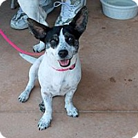 Adopt A Pet :: Dolly - Minneola, FL