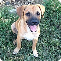 Adopt A Pet :: SAMMY - Torrance, CA