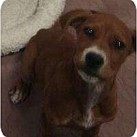 Adopt A Pet :: Kendall - Phoenix, AZ