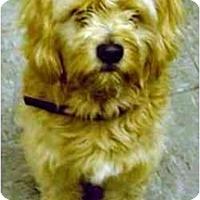 Adopt A Pet :: Bubba - dewey, AZ