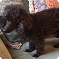 Adopt A Pet :: BLESSED - Melbourne, FL
