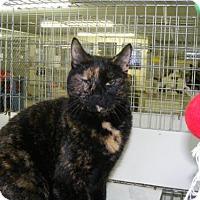 Adopt A Pet :: Precious - East Smithfield, PA