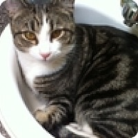 Adopt A Pet :: Achak - Vancouver, BC