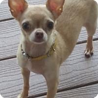 Adopt A Pet :: Daisy - Dayton - Dayton, OH