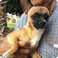 Adopt A Pet :: Depo - Alhambra, CA