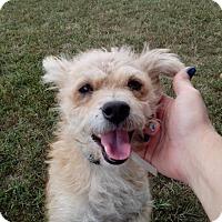 Adopt A Pet :: Toby - Lebanon, CT