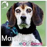 Adopt A Pet :: Marsha - Pittsburgh, PA