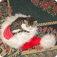 Adopt A Pet :: Vivienne - Seminole, FL