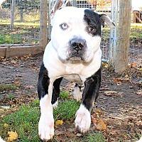 Adopt A Pet :: Jeeves - Lapeer, MI