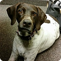 Adopt A Pet :: COCO - Fort Worth, TX