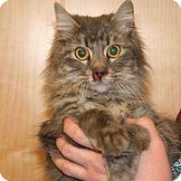 Adopt A Pet :: Honey Bun - Wildomar, CA