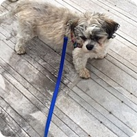 Adopt A Pet :: MICKEY - Eden Prairie, MN