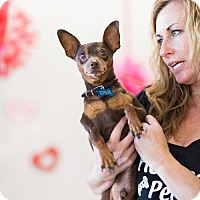 Adopt A Pet :: Speed Bump - Claremont - Chino Hills, CA