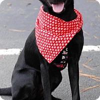 Adopt A Pet :: Azzelea - Alpharetta, GA