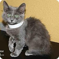 Adopt A Pet :: *MILLIE - Hanford, CA