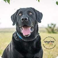 Adopt A Pet :: Bobo - Cheyenne, WY