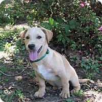 Adopt A Pet :: BRANT - Hartford, CT