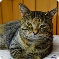Adopt A Pet :: Connie - Des Moines, IA