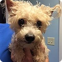 Adopt A Pet :: Darling - Franklin, IN