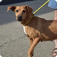 Adopt A Pet :: Ella - Buffalo, NY