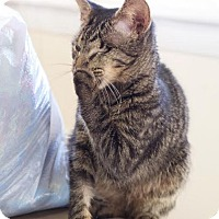 Adopt A Pet :: Sparrow *Special Needs* - Nashville, TN