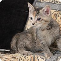 Adopt A Pet :: Taffy - Concord, NC