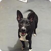 Adopt A Pet :: Alegra - Hope, BC