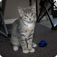 Adopt A Pet :: Thumper - Wichita, KS