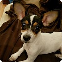 Adopt A Pet :: Lacey (Flower) - Lodi, CA